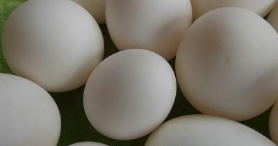 Telur Puyuh atau Telur Bebek, Mana Lebih Baik Bayi