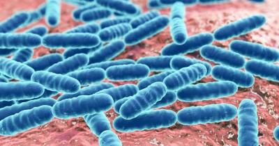 5 Kelebihan Bakteri Lactobacillus sebagai Probiotik