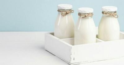 Keunggulan Manfaat Susu Organik bagi Tubuh