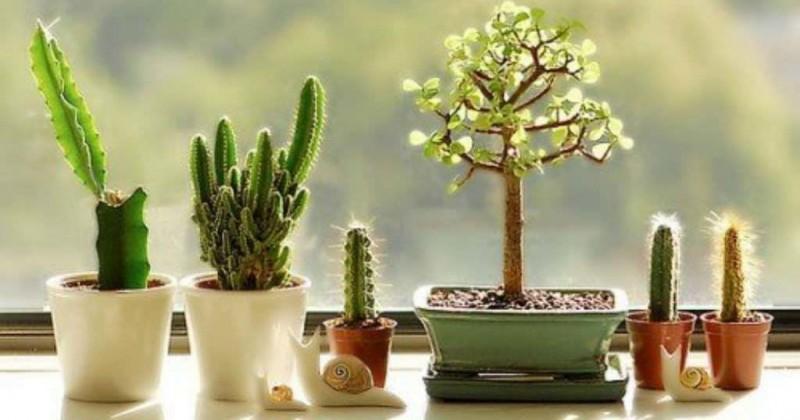 7 Tanaman Kaktus Untuk Menghias Rumah Popmama Com