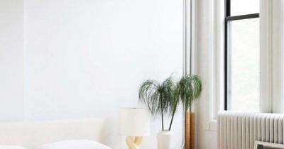 7 Tanaman Membuat Udara Kamar Tidur Lebih Segar