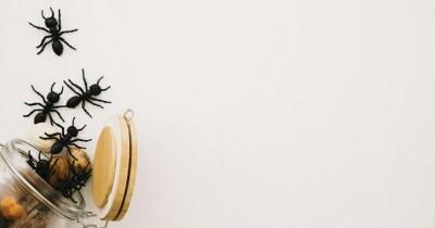 Ternyata, 5 Bahan Alami Ini Bisa Bantu Usir Semut Rumah