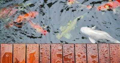 6 Ide Kolam Ikan Minimalis dengan Batu Alam