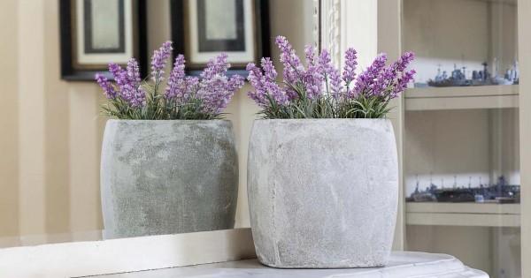 5 Manfaat Menanam Bunga Lavender Di Rumah Popmama Com