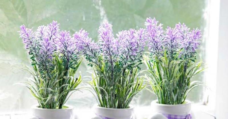 Cara Menanam Bunga Lavender Di Pot Popmama Com