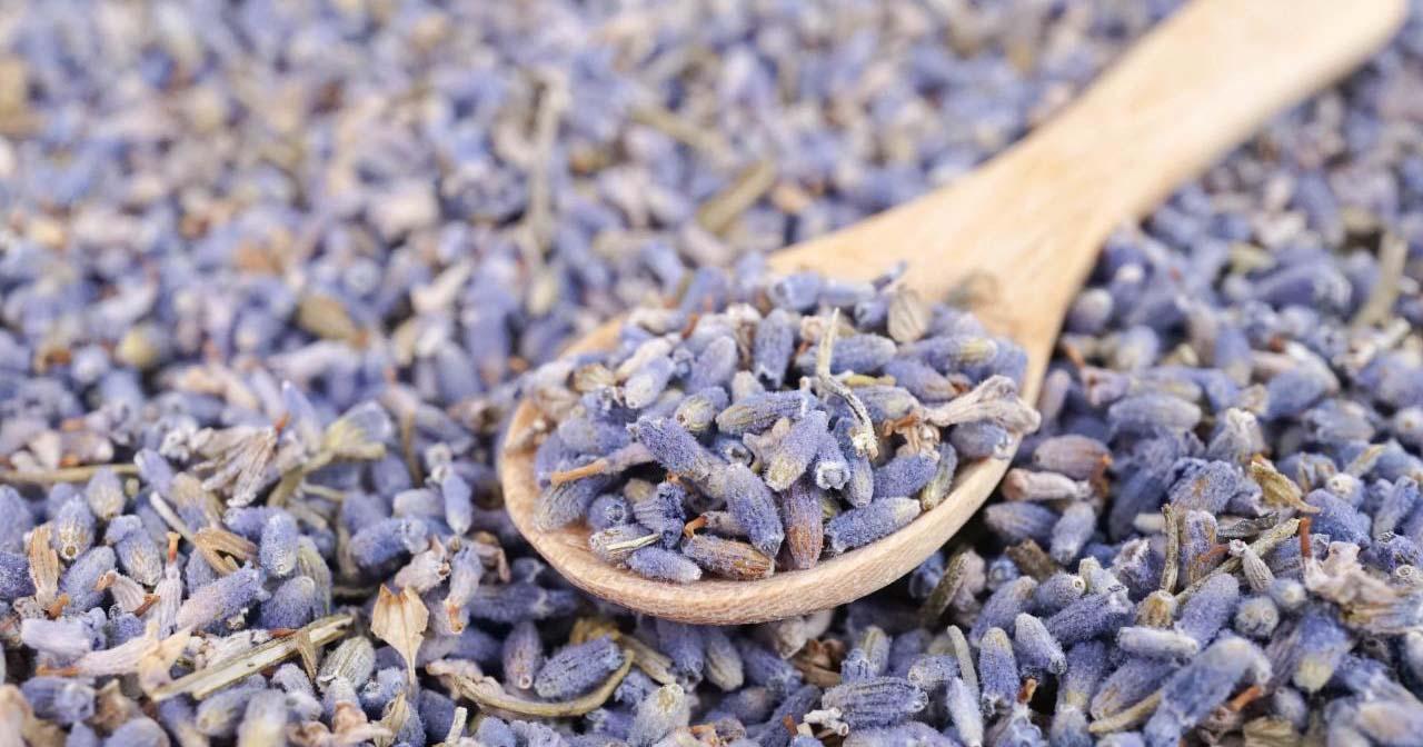 1518642090258 ebb5af2e56d6470c920819ce5c34b224 - Menanam Bunga Lavender di Pot