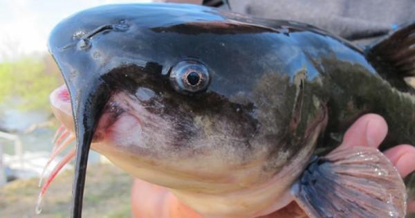 10 Jenis Ikan Berbahaya Yang Tidak Boleh Dimakan Ibu Hamil Popmama Com