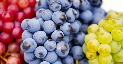 Beda Warna Rasa, Inilah 5 Jenis Buah Anggur