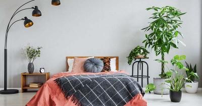 Agar Tidur Lebih Nyenyak, Letakkan 5 Tanaman Ini Kamar Tidur