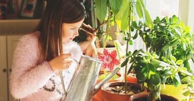 5 Cara Menanam Tanaman Bisa Dimakan Dalam Rumah