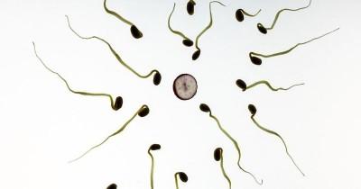 9 Jenis Kelainan Sperma yang Harus Diwaspadai oleh Laki-Laki