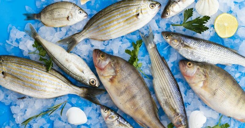 1. Ikan mengandung merkuri tinggi