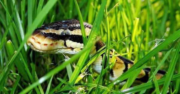 mimpi digigit ular 5