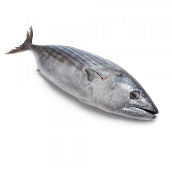 Ini 5 Manfaat Ikan Tongkol Untuk Ibu Hamil Popmama Com
