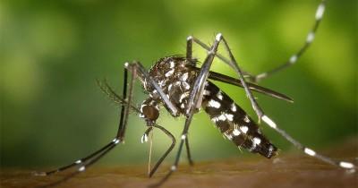 Benarkah Ibu Hamil Lebih Sering Digigit Serangga? Ini Faktanya!