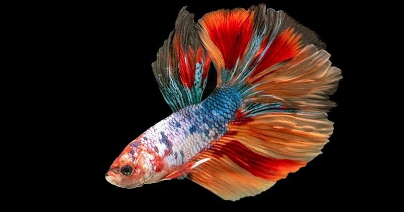 Gisel Dan Ashanty Kompak Pelihara Ikan Cupang Popmama Com