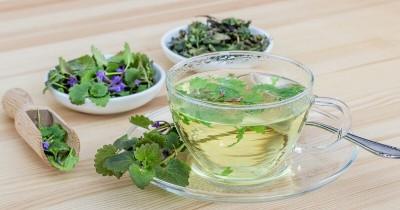 5 Jenis Daun Ini Berkhasiat Obat Herbal Atasi Beberapa Penyakit