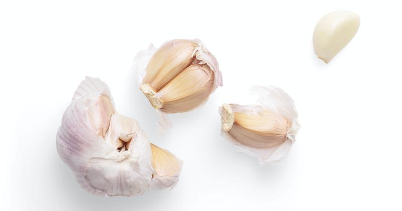 1. Bawang putih memiliki sifat seperti penisilin