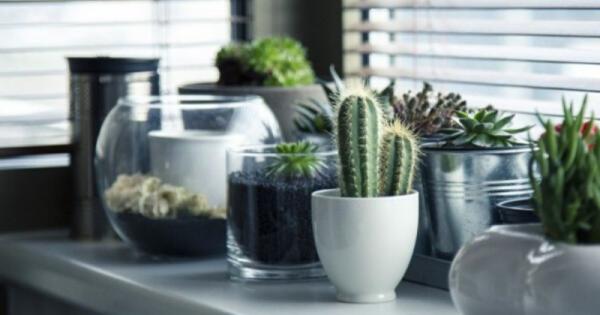 Hasil gambar untuk 7 Tanaman Hias untuk Dekorasi Interior Rumah nan Cantik