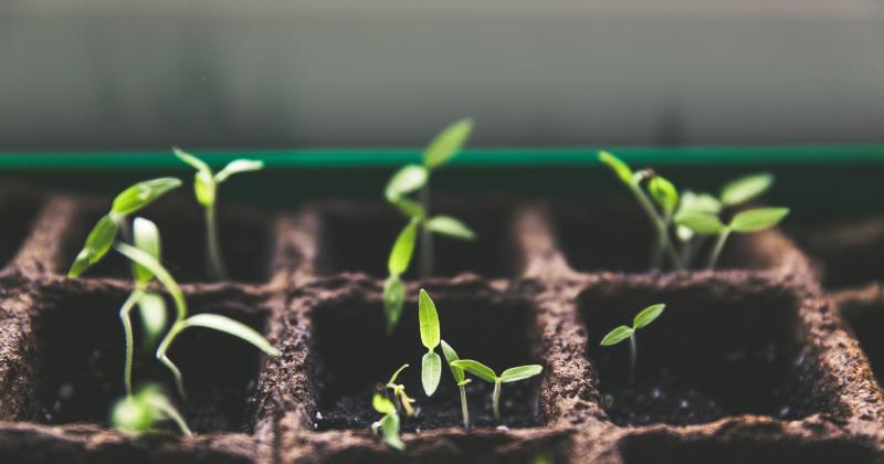 1. Belajar merawat tanaman