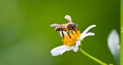 Ternyata, 5 Jenis Serangga Ini Bermanfaat bagi Tanaman Rumah