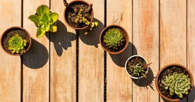 Tanam Rumah Yuk, Ini Dia 5 Jenis Tumbuhan Pemakan Serangga