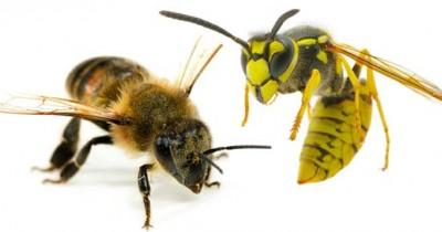Ini Perbedaan Lebah Tawon, Sering Dikira Sama oleh si Kecil
