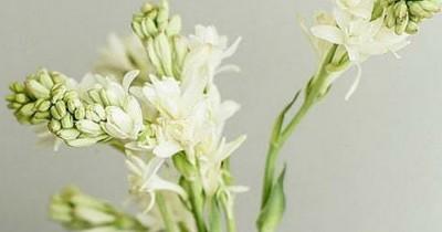 Agar Tetap Segar, Ini Dia 5 Tips Merawat Bunga Sedap Malam di Vas