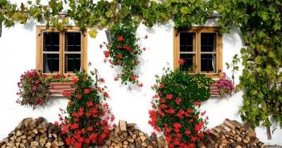 5 Jenis Tanaman Rambat Ini Bisa Memperindah Pekarangan Rumah