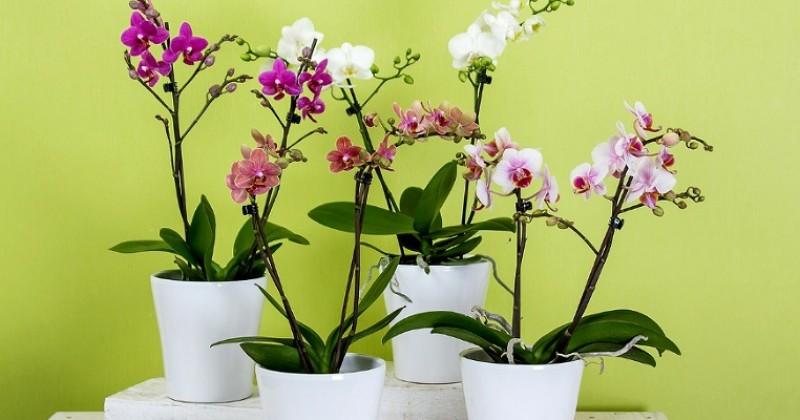 5 Manfaat Keberadaan Bunga Anggrek Popmama Com