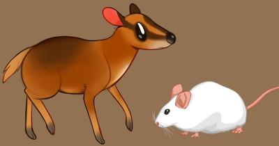 Dongeng Fabel Anak: Kancil dan Tikus