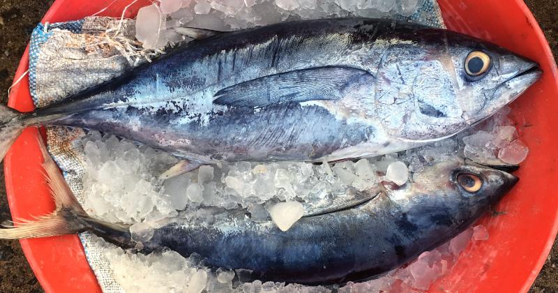 5. Ikan