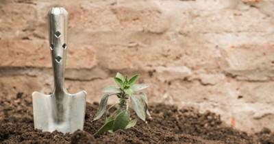 5 Manfaat Penggunaan Pupuk Organik Tanaman Rumah