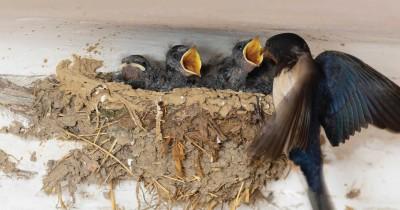 Bolehkah Ibu Hamil Mengonsumsi Sarang Burung Walet