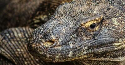 Fakta Menarik Pulau Komodo Rinca, Sedang Haid Tak Boleh ke Sana