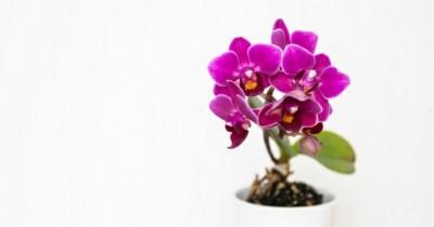 5Macam Bunga Ini Memiliki Warna Menawan Memancarkan Keindahan