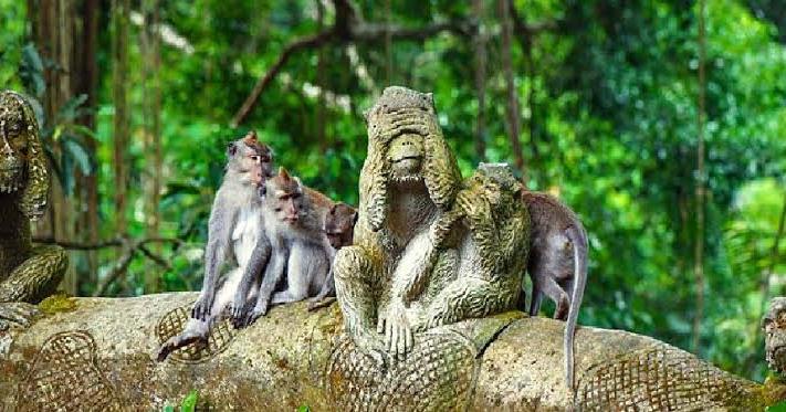 11. Monkey Forest