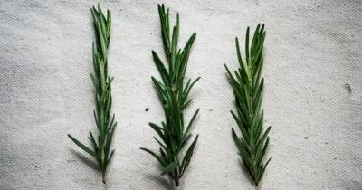 Cari Tahu 5 Manfaat Baik dari Rosemary untuk Kesehatan