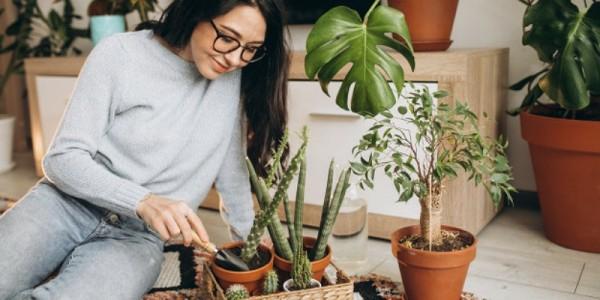 5 Jenis Tanaman Hias Termahal Yang Bisa Jadi Investasi Popmama Com