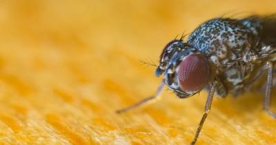 Jaga Kebersihan, Yuk Hindarkan Makanan dari Lalat