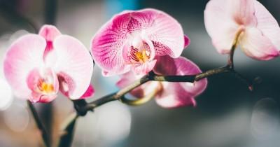 7 Bunga Anggrek yang Cantik untuk Membuat Rumah Semakin Asri