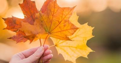 Sangat Unik, Inilah 5 Jenis Pohon Maple Ada Dunia