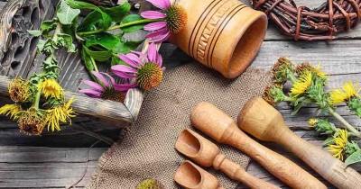 7 Manfaat Tanaman Echinacea Kesehatan Anak