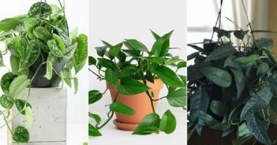 Mengenal 5 Jenis Tanaman Srigading Super Cantik