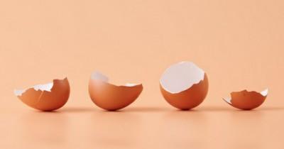 Jangan Dibuang, Ini Dia 5 Manfaat Cangkang Kulit Telur Tanaman