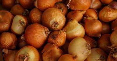 Buat Masakan Enak, Cek Yuk 7 Manfaat Bawang Bombai bagi Kesehatan
