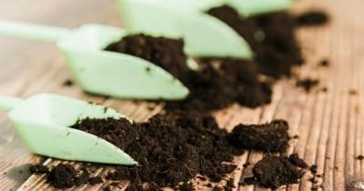 5 Jenis Pupuk Bisa Digunakan agar Tanaman Cepat Berbuah