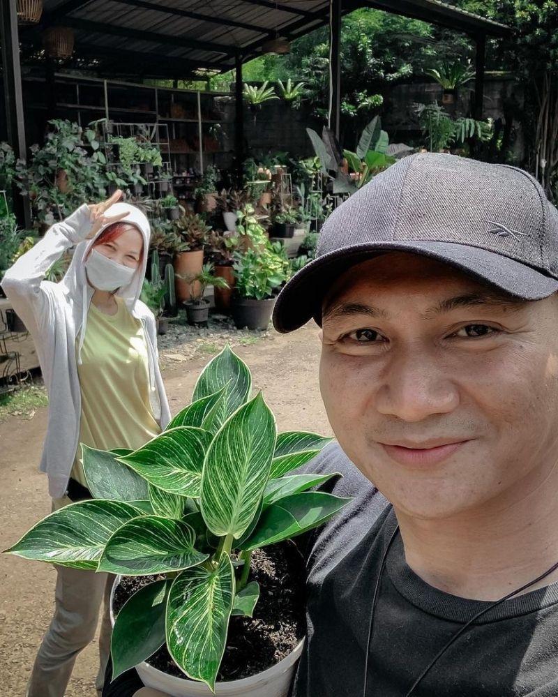 5. Banyak artis Indonesia mengoleksi philodendron