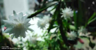 Eksotis Dipajang Rumah, Ini 6 Bunga Mekar Malam Hari