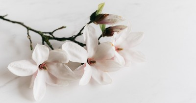 7 Tanaman Hias Berdaun Putih Indah Mempercantik Ruangan